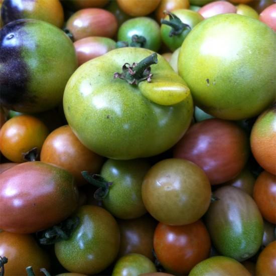 cristina cosentino. tomatoes. 02