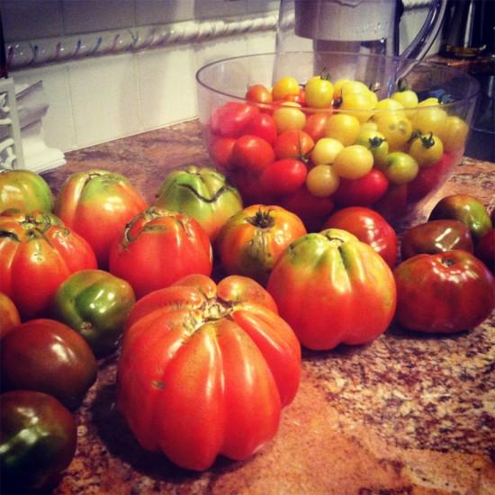 cristina cosentino. tomatoes. 03