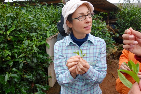 Nicole Basso of Sip Tea Lounge at a tea plantation in China.